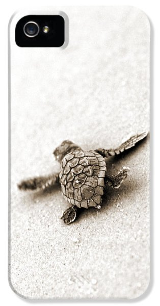 Turtle iPhone 5 Case - Loggerhead by Michael Stothard