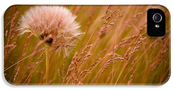 Lone Dandelion IPhone 5 Case by Bob Mintie