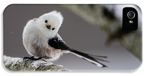 Long-tailed Look IPhone 5 Case by Torbjorn Swenelius
