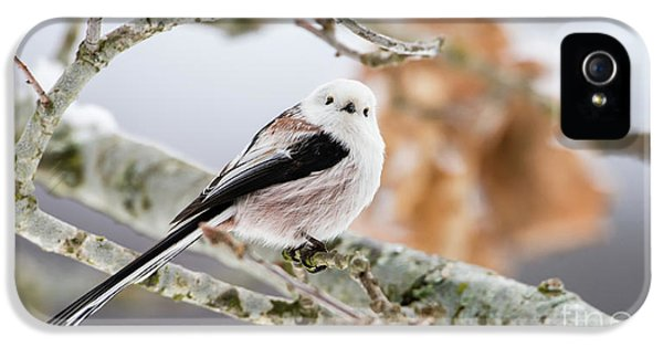 Long-tailed Tit IPhone 5 Case by Torbjorn Swenelius
