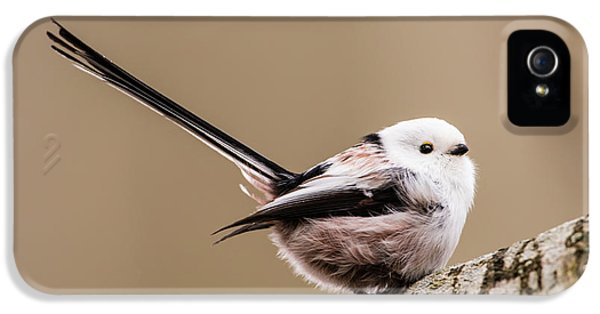 Long-tailed Tit Wag The Tail IPhone 5 Case by Torbjorn Swenelius