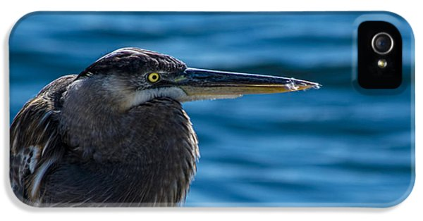 Looking For Lunch IPhone 5 Case by Marvin Spates