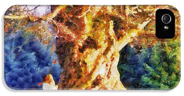 Old Tree iPhone 5 Cases - Lovers Tree iPhone 5 Case by Jai Johnson