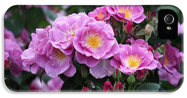 Lucky Floribunda Roses IPhone 5 Case