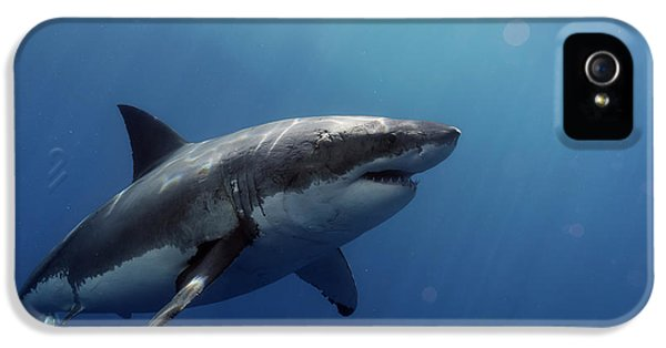 Lucy Posing At Isla Guadalupe IPhone 5 Case by Shane Linke