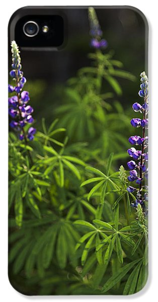Lupine IPhone 5 Case by Chad Dutson