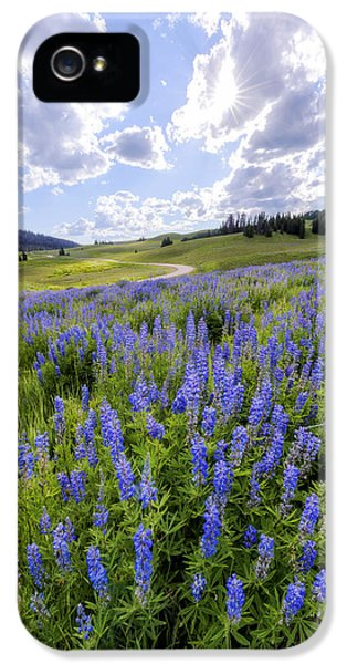 Lupine Pass IPhone 5 Case by Chad Dutson