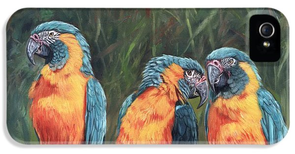 Macaws IPhone 5 Case by David Stribbling
