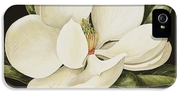 Magnolia Grandiflora IPhone 5 Case by Jenny Barron