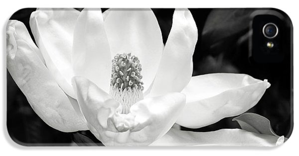 Magnolia Strong- By Linda Woods IPhone 5 Case by Linda Woods