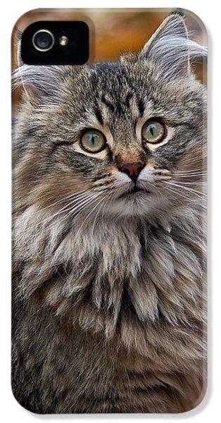 Maine Coon Cat IPhone 5 Case