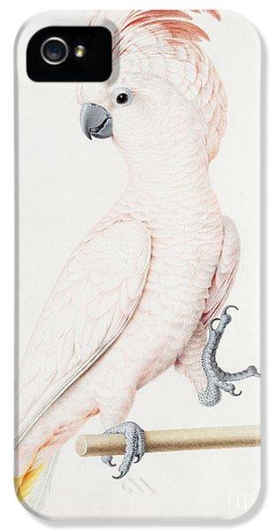 Cockatoo iPhone 5 Case - Major Mitchell's Cockatoo by Nicolas Robert