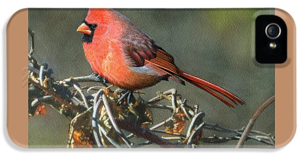 Male Cardinal IPhone 5 Case by Ken Everett