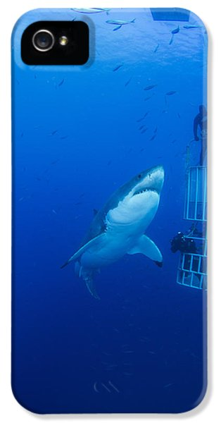 Male Great White With Cage, Guadalupe IPhone 5 Case by Todd Winner