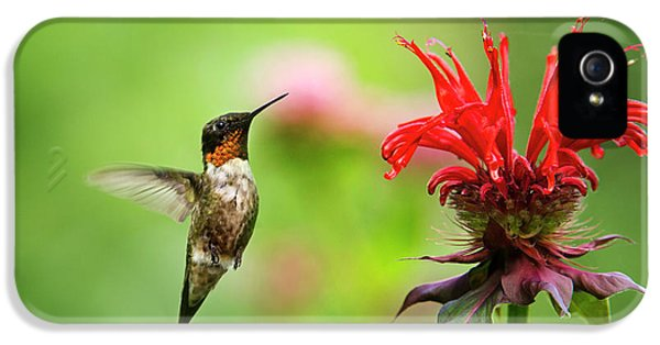Male Ruby-throated Hummingbird Hovering Near Flowers IPhone 5 Case