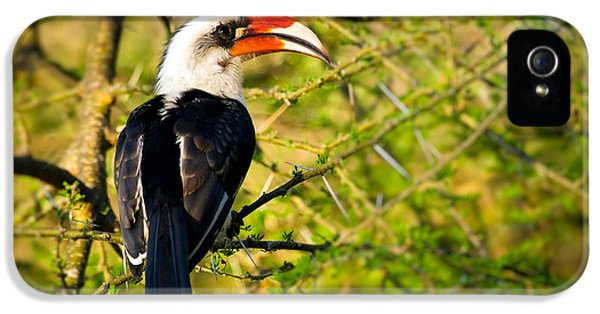 Male Von Der Decken's Hornbill IPhone 5 / 5s Case by Adam Romanowicz