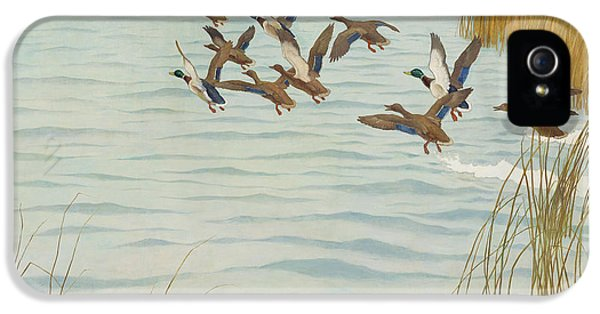 Mallards In Autumn IPhone 5 / 5s Case by Newell Convers Wyeth