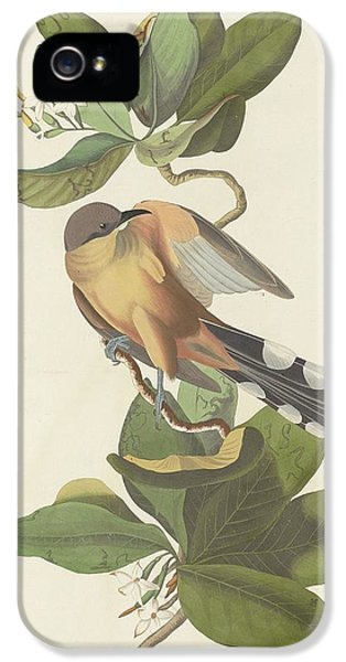 Mangrove Cuckoo IPhone 5 Case by Rob Dreyer