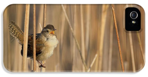 Marsh Wren Square IPhone 5 Case by Bill Wakeley