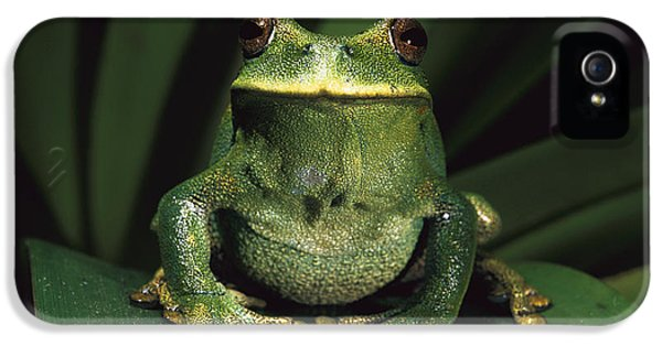 Marsupial Frog Gastrotheca Orophylax IPhone 5 Case by Pete Oxford
