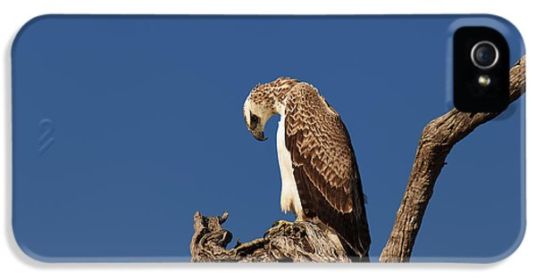 Martial Eagle IPhone 5 Case by Johan Swanepoel
