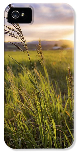 Etna iPhone 5 Case - Meadow Light by Chad Dutson