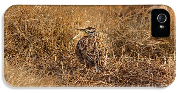 Meadowlark Hiding In Grass IPhone 5 / 5s Case by Robert Frederick