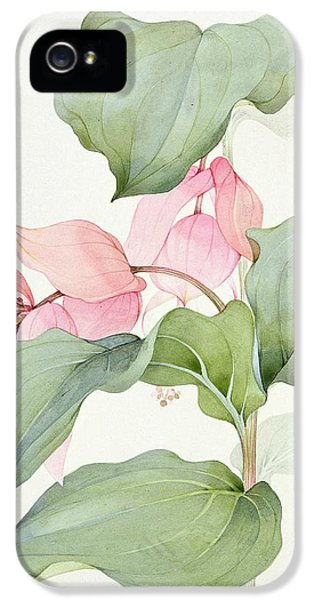 Medinilla Magnifica IPhone 5 Case by Sarah Creswell
