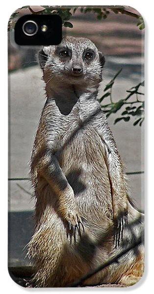Meerkat 2 IPhone 5 Case by Ernie Echols
