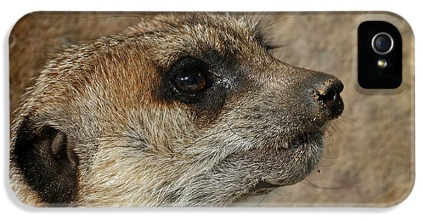 Meerkat 3 IPhone 5 Case by Ernie Echols