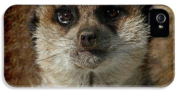 Meerkat 4 IPhone 5 / 5s Case by Ernie Echols