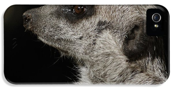 Meerkat Profile IPhone 5 Case by Ernie Echols