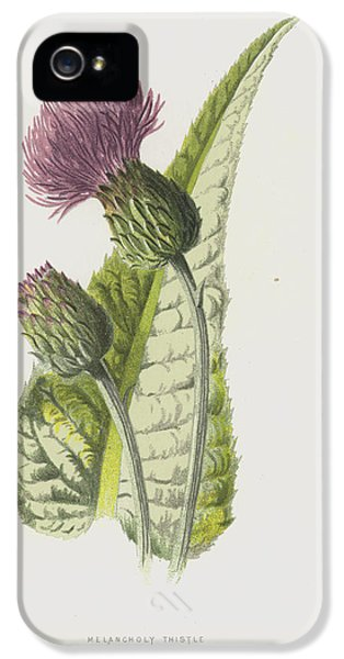 Melancholy Thistle IPhone 5 Case