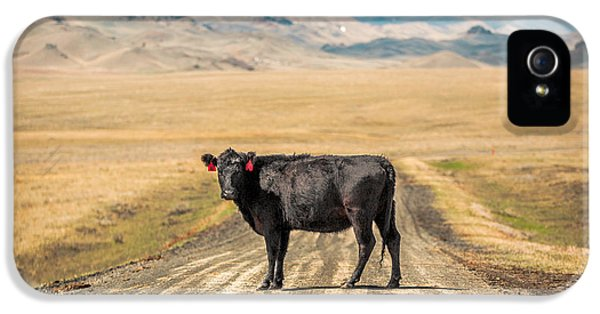 Middle Of The Road IPhone 5 Case by Todd Klassy