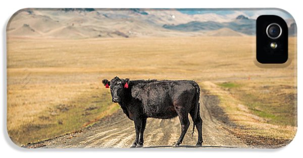 Cow iPhone 5 Case - Middle Of The Road by Todd Klassy