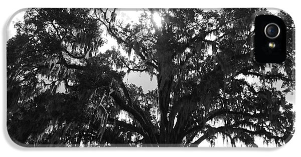 Mighty Old Oak Black And White IPhone 5 / 5s Case by Carol Groenen