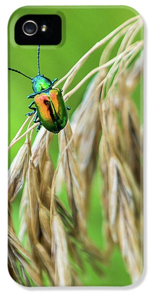IPhone 5 Case featuring the photograph Mini Metallic Magnificence  by Bill Pevlor