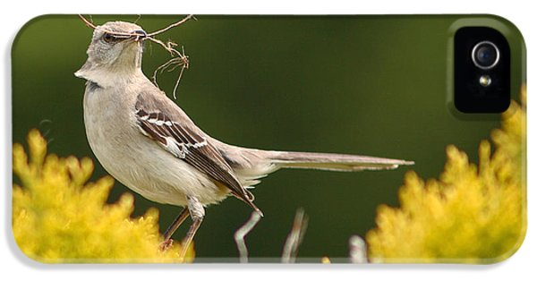Mockingbird Perched With Nesting Material IPhone 5 Case by Max Allen