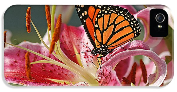 Lily iPhone 5 Case - Monarch On A Stargazer Lily by Cindi Ressler