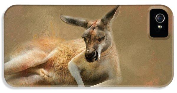 Monday Morning Drowsies Kangaroo Art IPhone 5 Case by Jai Johnson