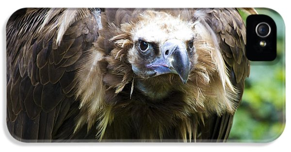 Monk Vulture 3 IPhone 5 Case by Heiko Koehrer-Wagner