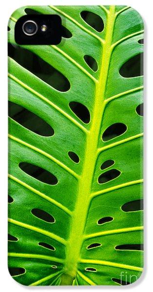 Monstera Leaf IPhone 5 Case by Carlos Caetano