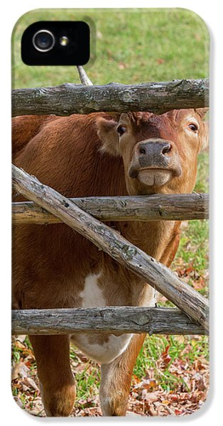 IPhone 5 Case featuring the photograph Moo by Bill Wakeley