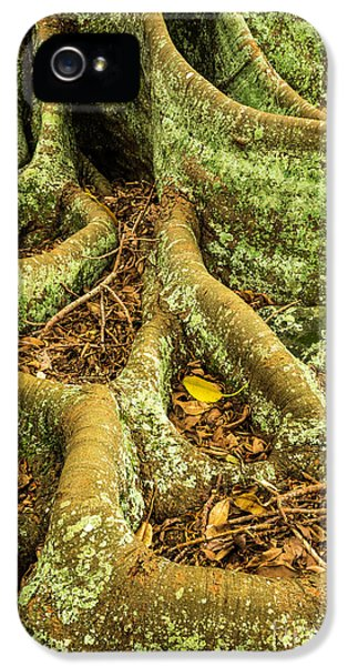IPhone 5 Case featuring the photograph Moreton Bay Fig by Werner Padarin