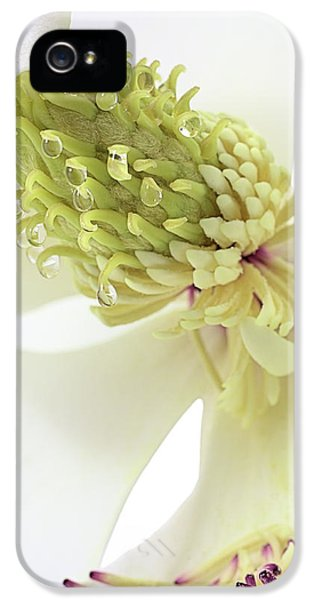 IPhone 5 Case featuring the photograph Morning Dew On The Magnolia by JC Findley