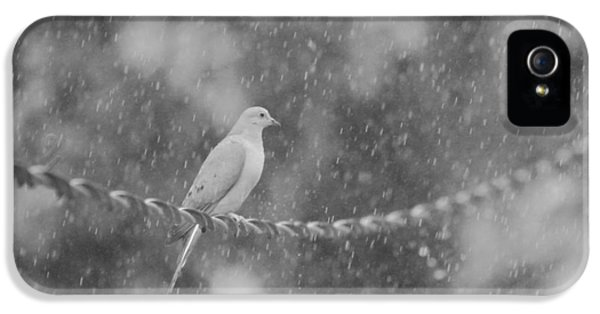 Morning Dove In The Rain IPhone 5 Case by Dan Sproul