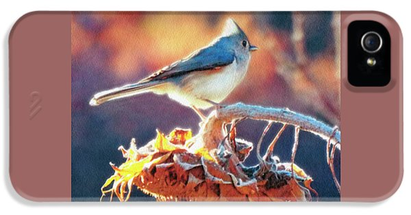 Titmouse iPhone 5 Case - Morning Glow by Ken Everett