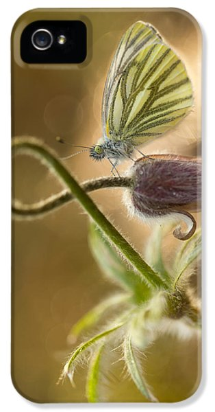 Morning Impression With Pasque Flower And Small Butterfly IPhone 5 Case by Jaroslaw Blaminsky