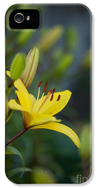 Lily iPhone 5 Case - Morning Lily by Mike Reid