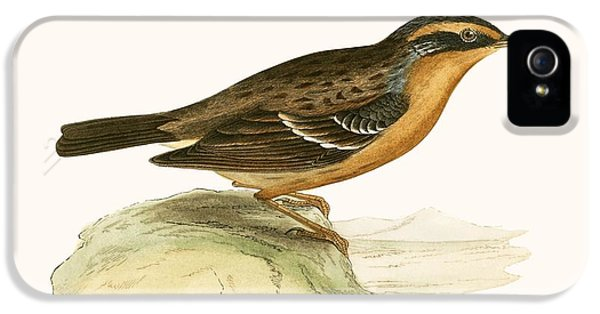 Mountain Accentor, IPhone 5 Case by English School